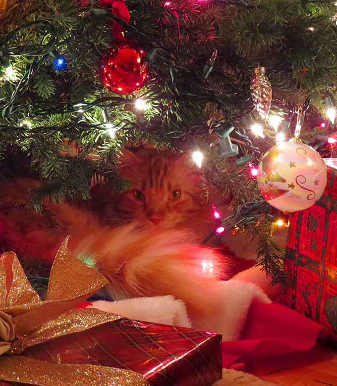 Monty under the christmas tree monty 39 s furry friends for Under the christmas tree 2017